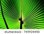 palm leaf macro in sunlight | Shutterstock . vector #745924450