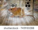 mouse inside a mouse trap  | Shutterstock . vector #745933288