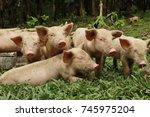 suckling after taking their... | Shutterstock . vector #745975204