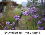flower | Shutterstock . vector #745978846
