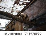 anteater  | Shutterstock . vector #745978930