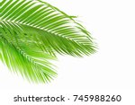 green palm leaves  isolated on... | Shutterstock . vector #745988260