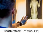veterinary doctor examining pet ... | Shutterstock . vector #746023144
