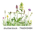 watercolor drawing wild plants... | Shutterstock . vector #746043484