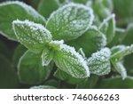 green peppermint leaves covered ... | Shutterstock . vector #746066263