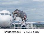 woman loading elephant on board ... | Shutterstock . vector #746115109