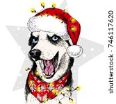 vector portrait of siberian... | Shutterstock .eps vector #746117620