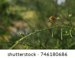 close up dragonfly on the... | Shutterstock . vector #746180686