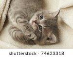 Stock photo funny kitten 74623318