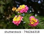 beautiful flower close up | Shutterstock . vector #746266318