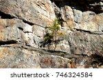 Cliff Side Pine Tree