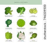 genus brassica vegetables set.... | Shutterstock .eps vector #746339500