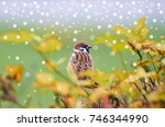 First Snow Is Falling. Sparrow  ...