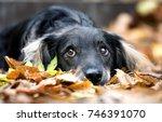 adorable mixed breed dog  mutt  ... | Shutterstock . vector #746391070