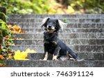 cute black mixed breed dog ... | Shutterstock . vector #746391124