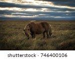 Icelandic Horse Grazing