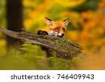 beautiful young fox in colorful ...   Shutterstock . vector #746409943