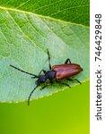 beetle barbel   Shutterstock . vector #746429848