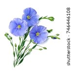 flax blue flowers close up on...   Shutterstock . vector #746446108