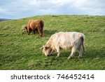 couple of highland cattle  a... | Shutterstock . vector #746452414
