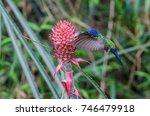 swallow tailed hummingbird...   Shutterstock . vector #746479918