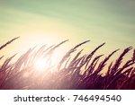 grass at sunrise in the sun | Shutterstock . vector #746494540