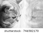 a domestic cat looks out the... | Shutterstock . vector #746582170