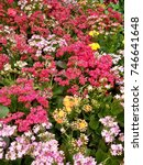 Small photo of bed of flowers
