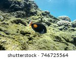 Small photo of Underwater Paradise, Achilles tang, Big Island Hawaii