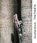 close up of sunbathing lizard.  ... | Shutterstock . vector #746746876