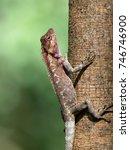 close up of sunbathing lizard.  ... | Shutterstock . vector #746746900