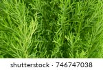 green plant and nature tree... | Shutterstock . vector #746747038