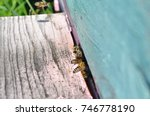 Hives In An Apiary. Bees Flyin...
