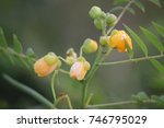 Small photo of Yellow Flower Bluffly