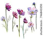wildflower aster flower in a...   Shutterstock . vector #746843350