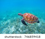 wild sea turtle in blue ocean... | Shutterstock . vector #746859418