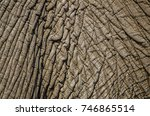 the delicate  wrinkled skin of... | Shutterstock . vector #746865514