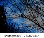 A Crow Perched On A Tree ...