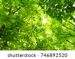 green leaves of tree in the... | Shutterstock . vector #746892520