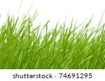 Fresh green grass isolated on white background. - stock photo