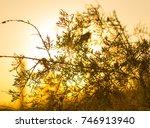 grass on sunset background   Shutterstock . vector #746913940