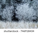 Small photo of Frozen forest edge