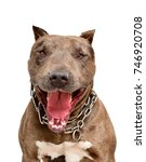portrait of a funny smiling pit ... | Shutterstock . vector #746920708