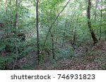 forest. rakhiv district.... | Shutterstock . vector #746931823