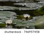 lovely flowers white nymphaea... | Shutterstock . vector #746957458