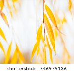 yellow leaves of the weeping... | Shutterstock . vector #746979136