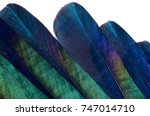 close up of iridescent feathers ... | Shutterstock . vector #747014710