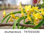 Small photo of Yellow orchid flower is a beautiful bouquet.