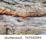 tree bark texture | Shutterstock . vector #747033394