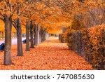 beautiful autumnal scenery of...